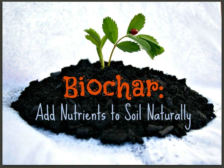 Biochar adding nutrients in soil how to make charcoal for What minerals are found in soil