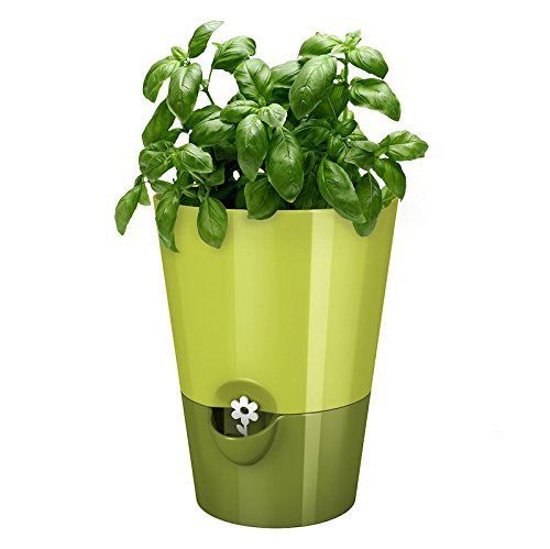 EMSA Germany  Indoor Gardening  selfwatering planter keeping kitchen herbs fresh  healthy for weeks >>> Want to know more, click on the image.