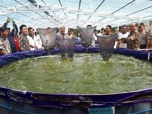 1 Wow Usaha Ternak Lele Ini Beromset Milyaran Terpal Kolam Ikan Air Tawar
