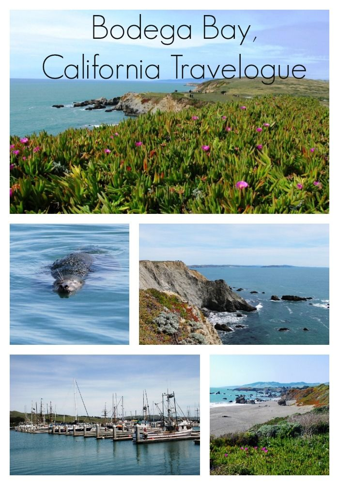 Travel on the Northern California coast: Connecting (and Disconnecting) in Bodega Bay
