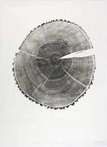 Stieleiche/Quercus Robur (26.12.99)