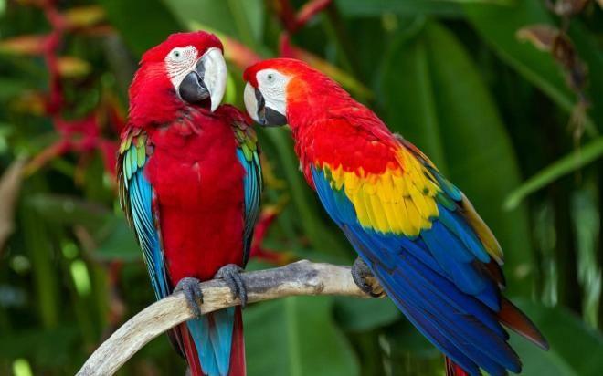 رؤيا حلم صيد الببغاء في المنام الببغاء في الحلم الببغاء في المنام تفسير ابن سيرين تفسير النابلسي Macaw Art Macaw Animals Of The World