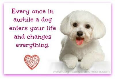 ...or should I say three Maltese dogs changed everything!