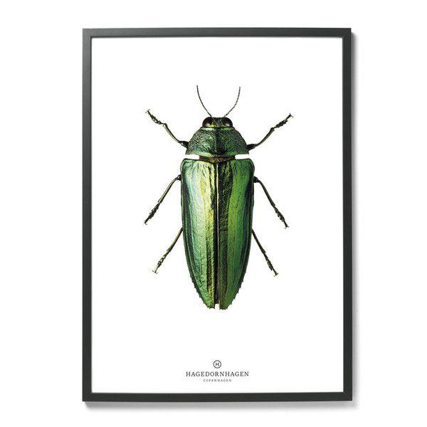Plakat Hagedornhagen- owad | Designzoo