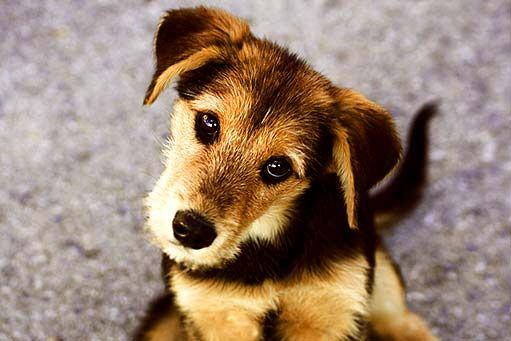 pes - Hľadať Googlom