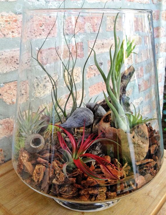 Low Maintenance Air Plant Terrarium, by lovelyterrariums. I just think this looks really neat