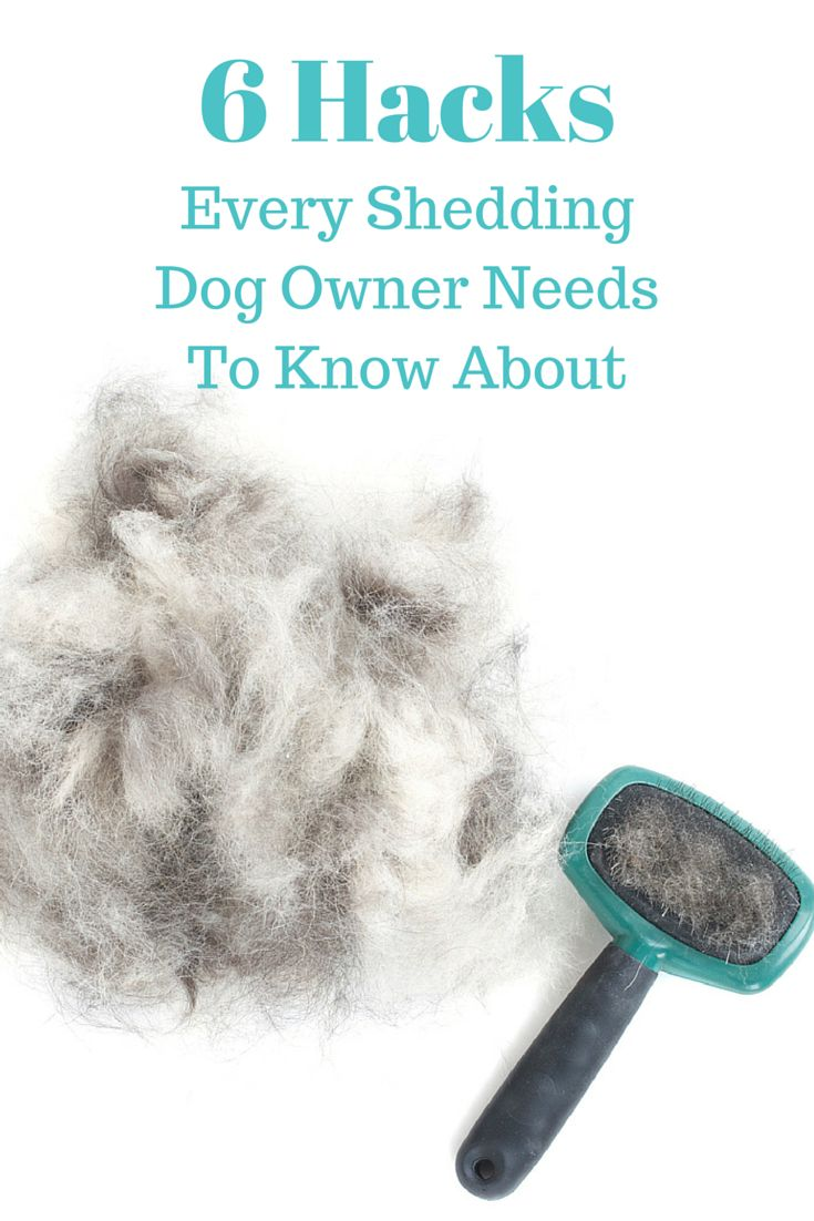 6 Hacks Every Shedding Dog Owner Needs To Know About: Does your dog shed? Find out how to keep dog shedding under control, and which dog breeds you should NEVER shave.