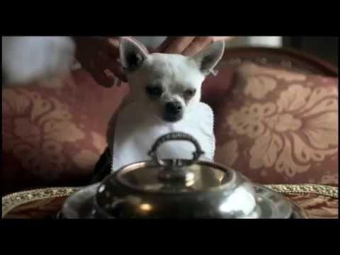 """AMNESTY INTERNATIONAL - """"DOG'S LIFE"""""""