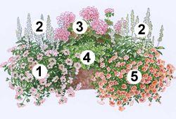 Blumenkasten zum Nachpflanzen                                                                                                                                                                                 Mehr