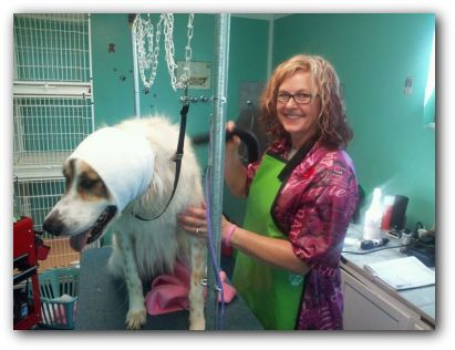 Happy Hoodie calms dogs in the grooming salon. Great for older dogs and noise sensitive dogs