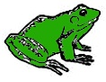 Something Froggy - Life Cycle of the Frog