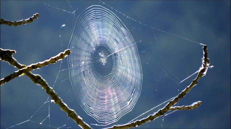 Gianmaria Testa - Tela di ragno