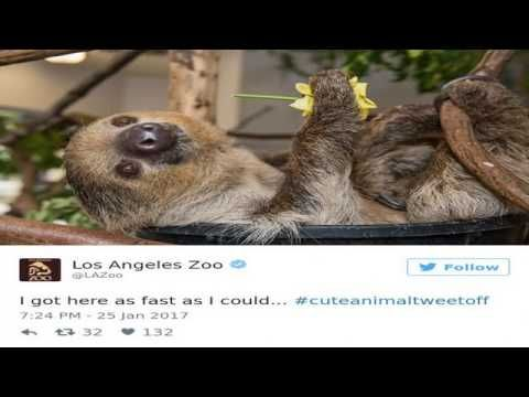 Nation's Zoos Get Into Brutal #CuteAnimalTweetOff Battle, And It's Exact...
