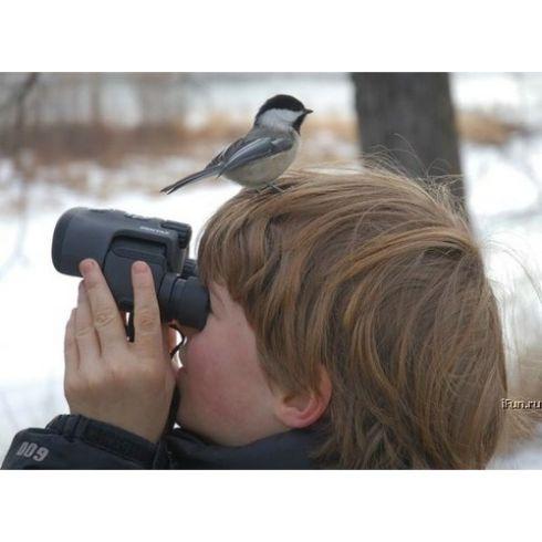 Birdwatching.