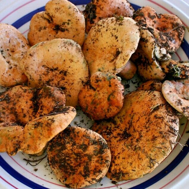Fresh mediterranean wild mushrooms. Simple recipe and really yummy! Chek the recipe in our cooking blog http://bit.ly/1zocULx