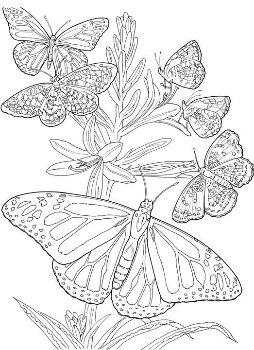 Colouring Pages Of Flowers And Butterflies : 45 best adult coloring images on pinterest