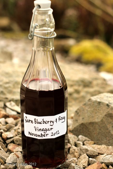 Once you know how to make your own vinegar you can experiment with different flavours. Last year I showed you how to make your own apple cider vinegar. This year, I experimented to see if I …