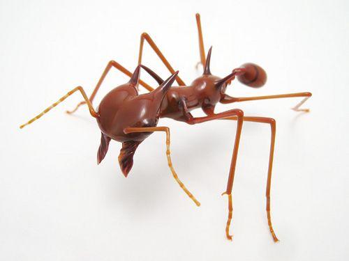 51 best Ameisen images on Pinterest Ants, Ant and Bugs - ameisen in der küche was tun