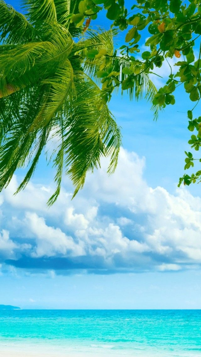 Tropical beach                                                                                                                                                                                 More