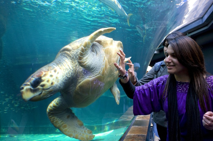 Two Oceans Aquariums is awesome!  Copyright Cape Town Tourism