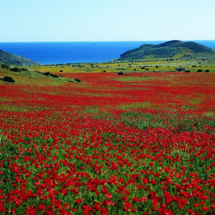Almeria ~ Cabo de Gata