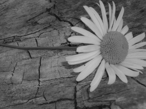 Smile it's a daisy