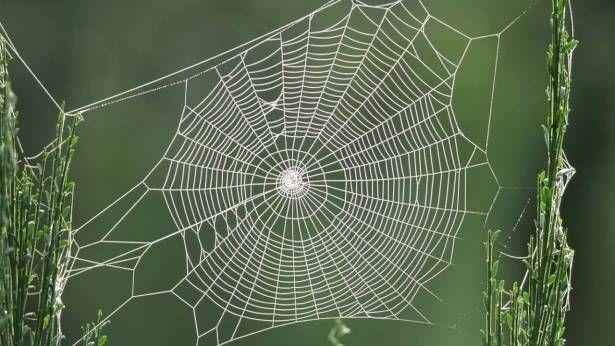 بيت العنكبوت Spider Web Spider Art Spider