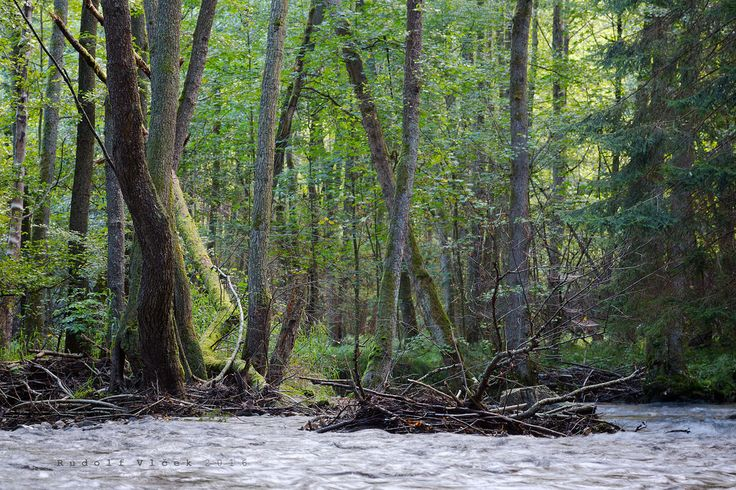 Bottomland Forrest