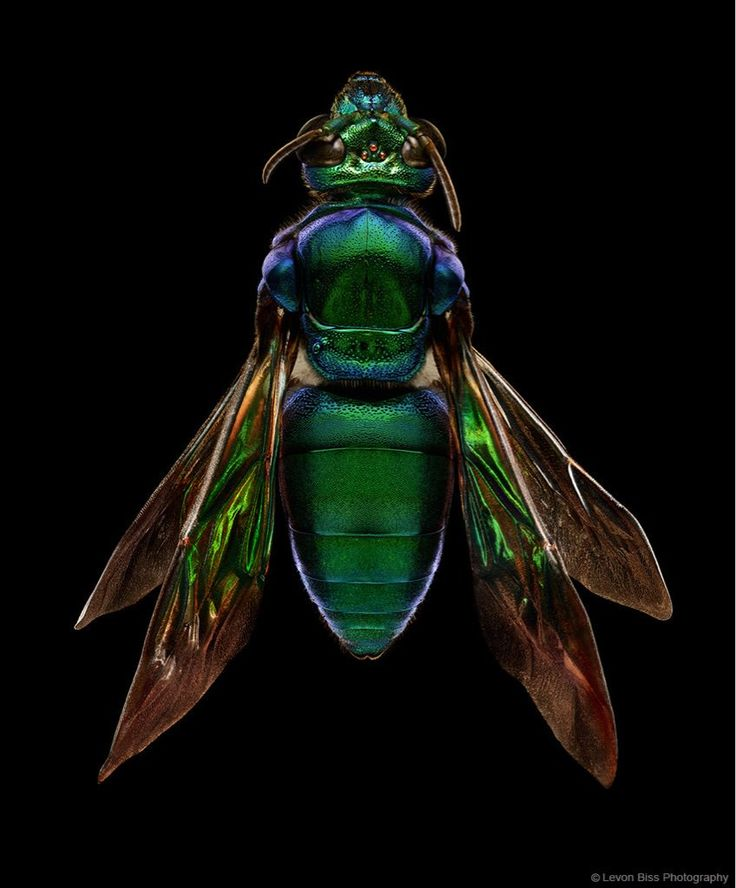 Best Microsculptures Images On Pinterest Insects The Beauty - Each of these macro bug photographs is made from thousands of individual images