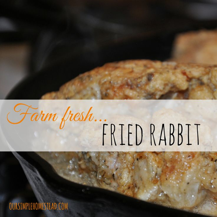Farm Fresh Fried Rabbit - Raising Rabbits. The cycle continues…breed rabbit…raise rabbit…butcher rabbit. Raising rabbits for meat is one of the easiest and most cost effect ways to provide healthy lean meat for our family.  We raise New Zealand Whites and grow three litters a year. #raisingrabbits