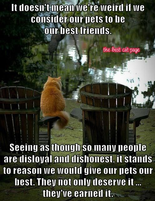 The Best Cat Page,      Facebook, https://www.faceboo     k.com/The          BestCatPage?        Our best friens =hl   Our best friends