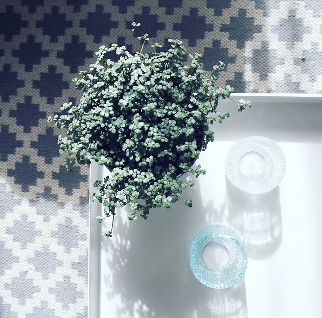 Plant Photo: Sonja|Kodissa Blog