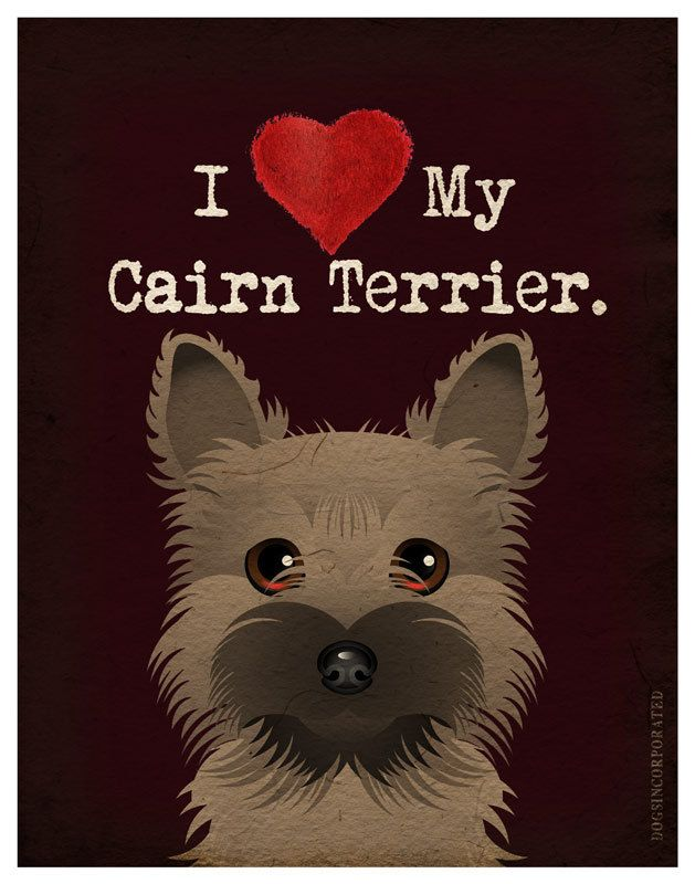 We love Cairn Terriers. They are so cute and packed full of personality. Great little companions!