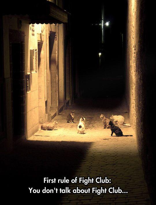 Cat fight club