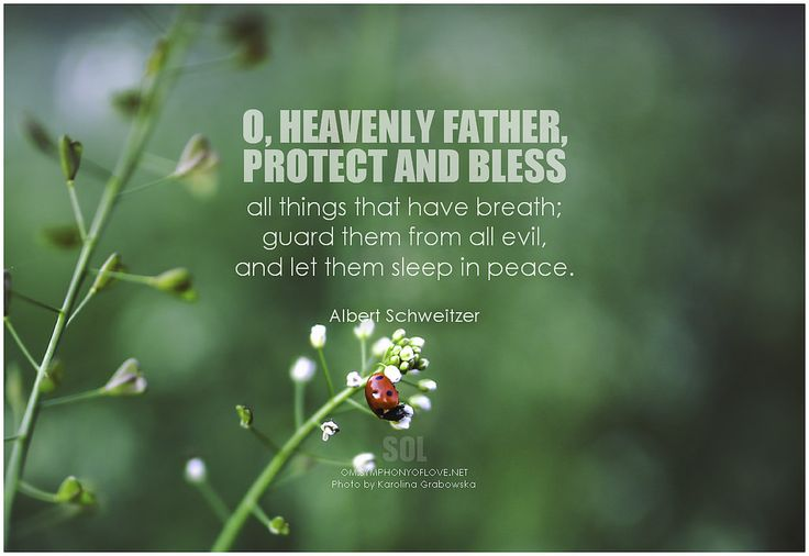 O, heavenly Father, protect and bless all things that have breath; guard them from all evil, and let them sleep in peace. - Albert Schweitzer, Memoirs of Childhood and Youth #kindness #prayer #quotes #inspirational #inspirationalquotes #inspirationalwords #picturequote #pictures