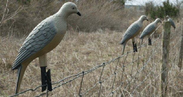 5 Simple Dove Hunting Tips and Gear Picks [PICS]