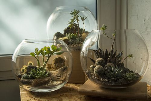 Terrarium Trio: Copper Desert, Platinum Desert and Obsidian Desert | Flickr…