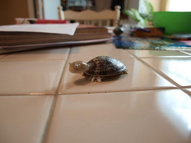 Make a Tiny Turtle!   11 DIY Projects Inspired By Your Day At The Beach