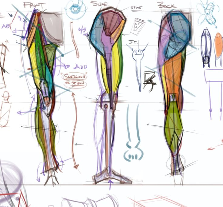173 best Drawing Legs images on Pinterest | Anatomy reference, Human ...