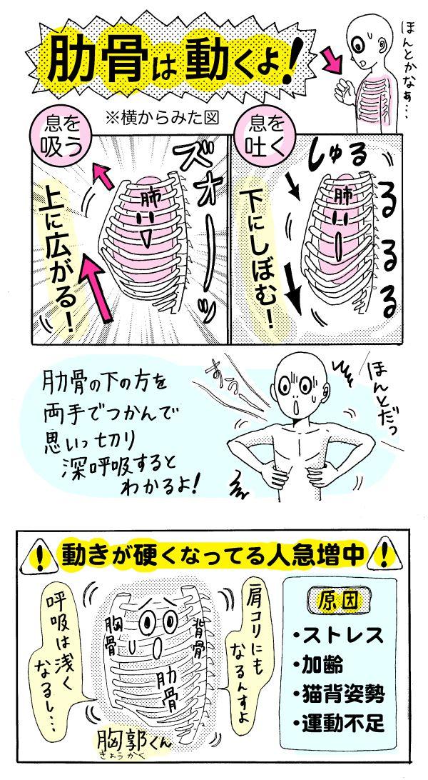 肋骨(あばら骨)が動くのを知っていますか?肩コリやストレス・疲れやすい体質の原因にもなる肋骨の動きとは……!?「肋骨」は肺や心臓など、生命活動にとって重要な臓器をグルリと囲う鎧のような役目をしています...