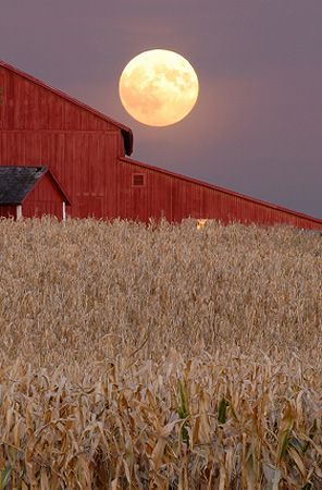 Harvest moon rising over a barn on a cornfield outside Champaign, Illinois