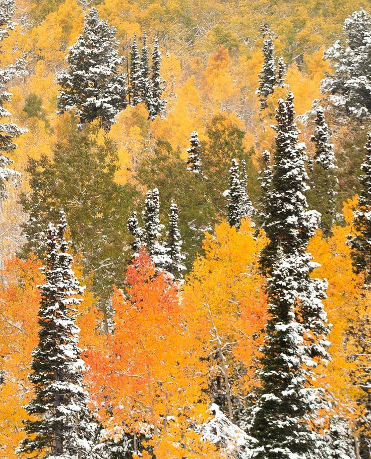 Need your fall color fix? Don't worry we've got you covered. \ @ak_snap #brightonresort #utah #fall #snow