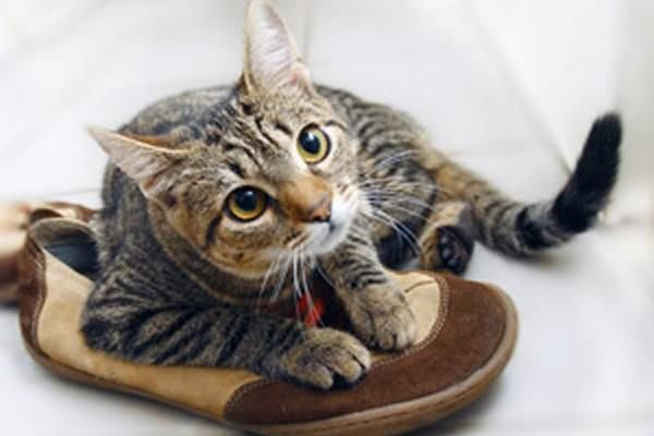 Как избавиться от запаха кошачьей мочи на обувь