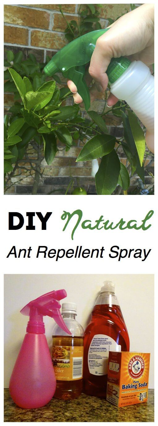 Works BETTER than harsh chemicals! This DIY Natural Ant Repellent Spray is safe, easy, cheap!