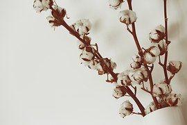 Cotton, Flowers, Vase, White, Decor