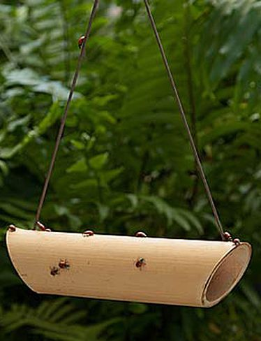 Ladybug feeder. Aphids are the most common garden pest. Luckily, one ladybug can eat dozens of aphids a day, seeking them out wherever they hide. Ladybugs also prey on mealybugs, scale, leaf hoppers and mites. Bait these natural bamboo feeding stations with a raisin or two to welcome ladybugs into your garden and provide food when aphids are scarce.