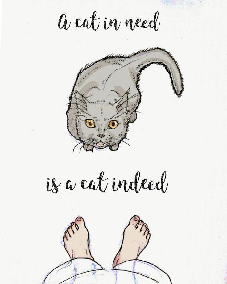 Humorous cat lady/ pride & prejudice fan life mashup. Kinda