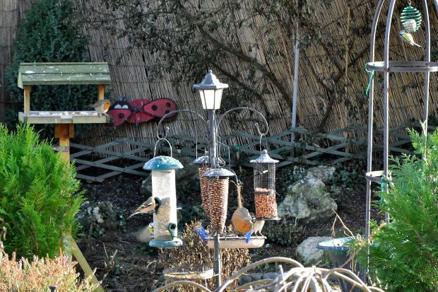 17 best images about homemade bird food on pinterest for How to make homemade bird houses