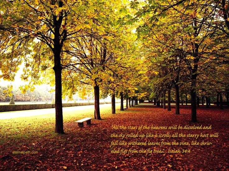 Fall Trees Wallpaper Christian Wallpapers and