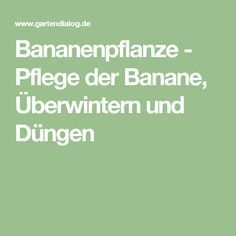 Bananenpflanze - Pflege der Banane, Überwintern und Düngen